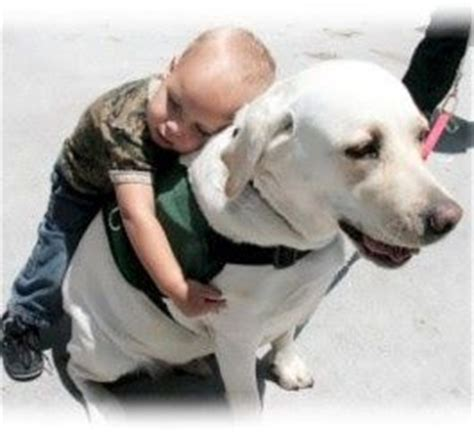 autism therapy dogs 1000 images about animal helpers cadette badge on psychiatric services