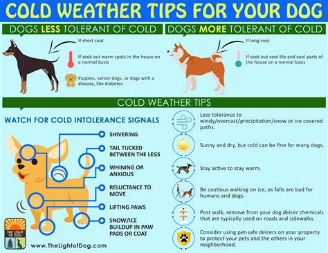 puppy advice cold weather tips for your the light of