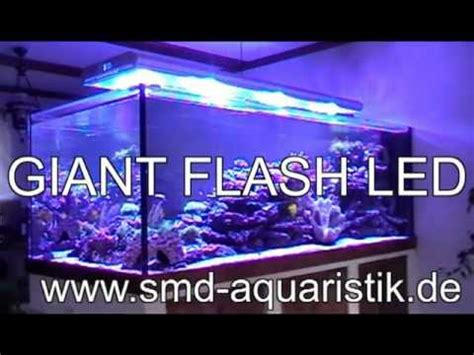 aquarium led beleuchtung flash led reef aquarium beleuchtung mit high power