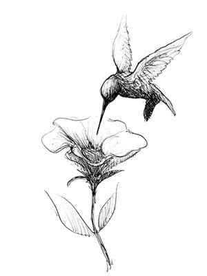 bevalet s hummingbirds and flowers a vintage grayscale coloring book vintage grayscale coloring books volume 3 books black white illustrations elizabeth berg