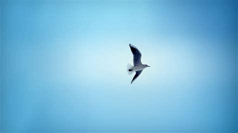 hd wallpapers free high definition desktop backgrounds beautiful bird flying in sky hd desktop wallpaper
