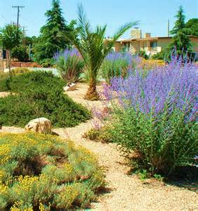 drought tolerant landscapes photo