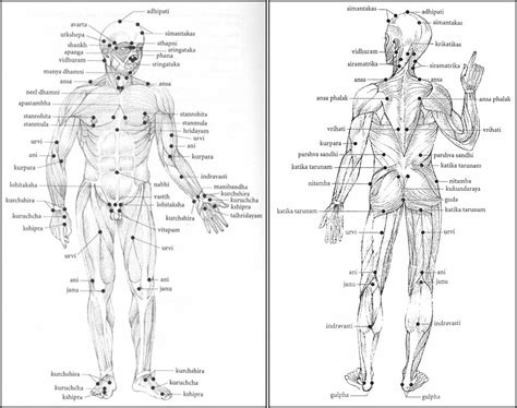 diagram of pressure points on the human marma points continuous pressure vitapa marma is