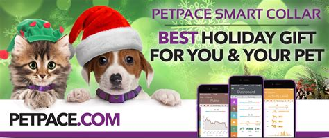 Marilyn Denis 10 Days Of Giveaways 2016 - petpace wearable pet health tech showcased on canada s marilyn denis show