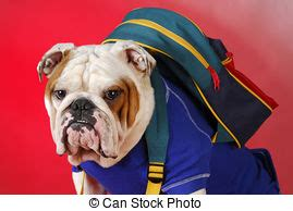 Bulldog Clip Joyko 6 145 Each obedience stock photos and images 15 954 obedience