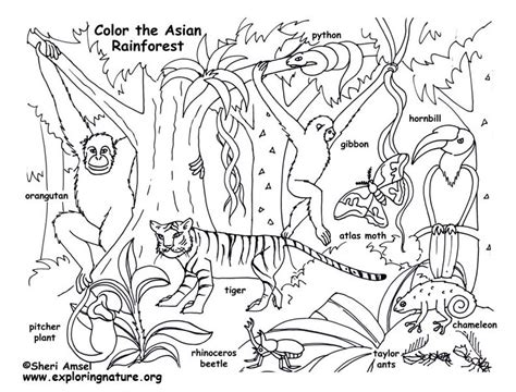 hardwood forest coloring page exploring nature