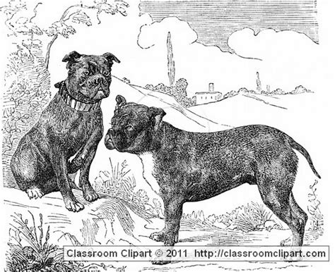free puppies in massachusetts dogs bull dog ma classroom clipart