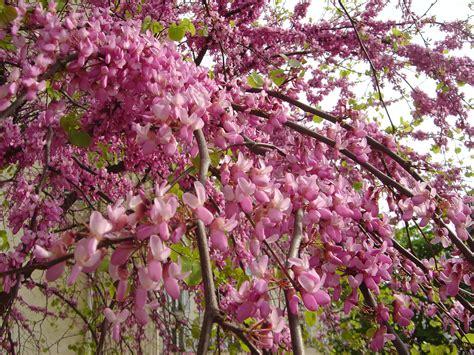 file tree flower dsc00980 jpg wikimedia commons
