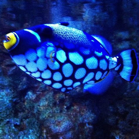 cool looking very cool looking fish john vowell flickr