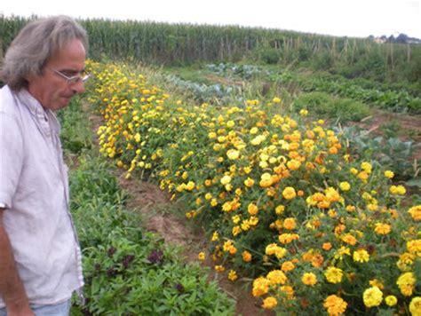 agricola mantovana lavora con noi casatenovo all orto sociale quot le zucche di cenerentola