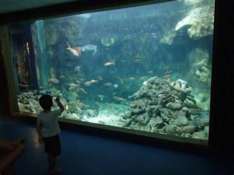 Aquarium De La Guadeloupe Le Gosier Updated 2018 All