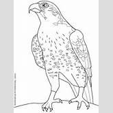Kleurplaat Kleurplaat vogels (3756) | kleurplaten