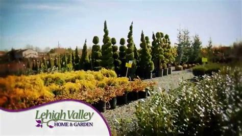 28 best christmas tree farms in lehigh valley