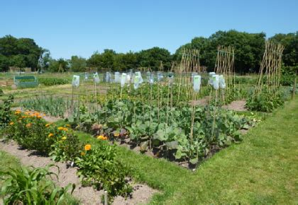 community allotments open in plympton the plymouth daily
