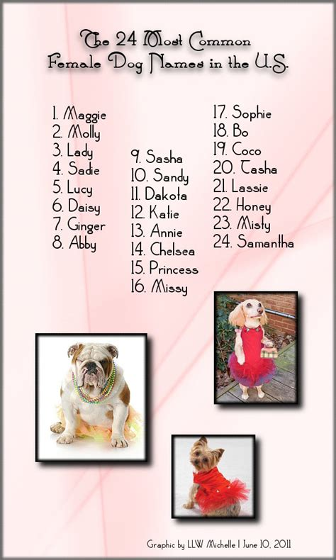 puppy names for females the 24 most common names in the u s motley dogs