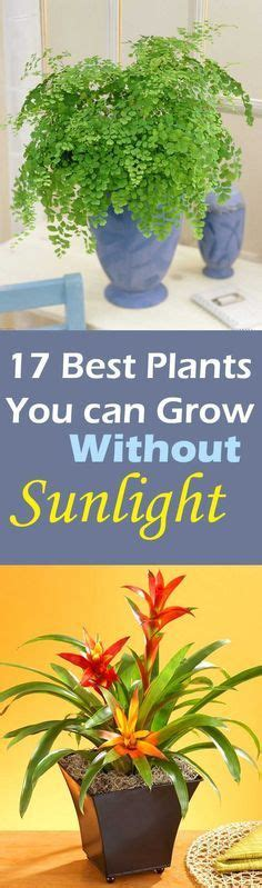 kitchen plants that don t need sunlight dress up your home with these indoor plants that don t