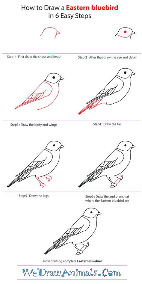 how to draw an eastern bluebird