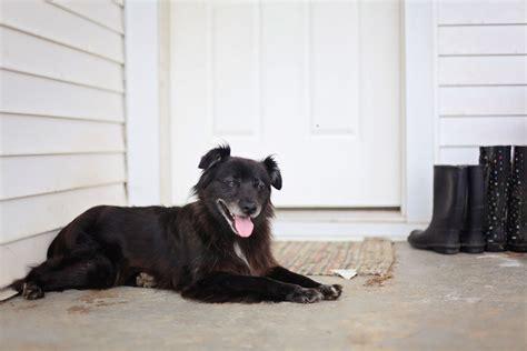 pet insurance worth   common myths  broke dog
