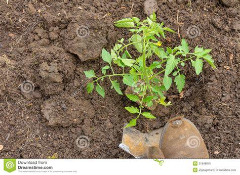 vegetable garden preparation home vegetable gardening preparation royalty free stock