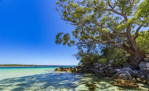public boat rs jervis bay jervis bay australia find hotels cing beaches
