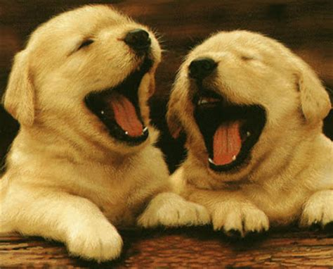 laughing puppy image gallery laughing puppy