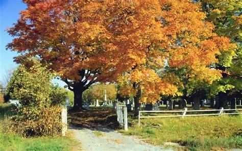Kostenlose Bilder Herbst by Herbstbilder Kostenlos