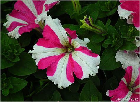 Different Is Beautiful different beautiful flowers 171 wallpaper tadka