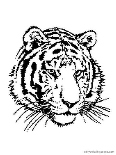 tiger animal coloring pages coloring home
