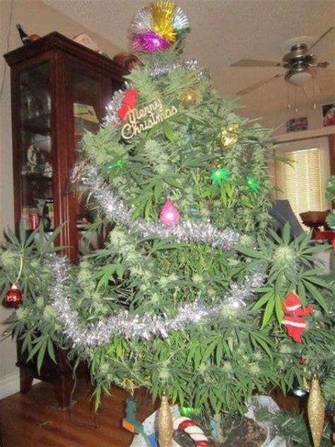 pot christmas tree funny pinterest