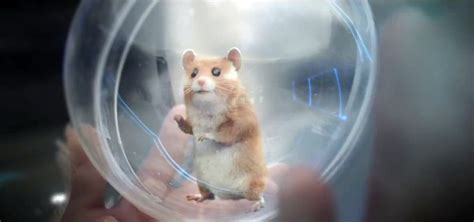 Kia Hamster Commercial Song Kia Hamster Commercial Featuring Animalscomputer Graphics