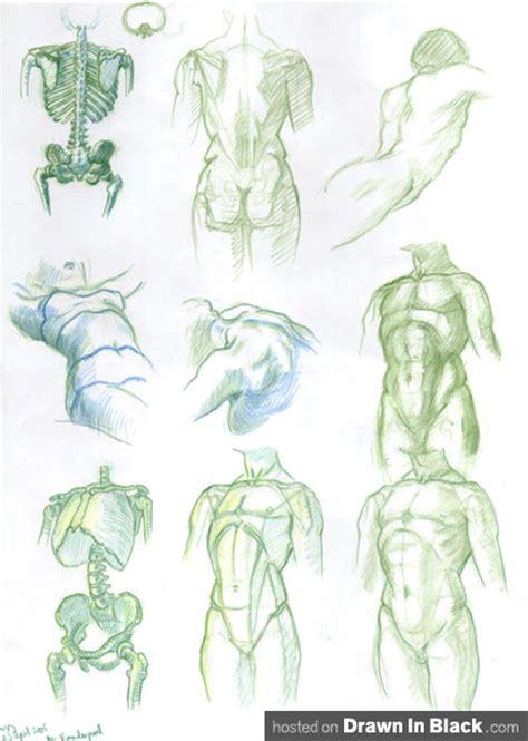 Drawing Human Anatomy by Human Anatomy Drawings Www Pixshark Images