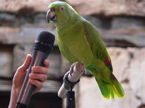 training a parrot to talk the right way 5 pics