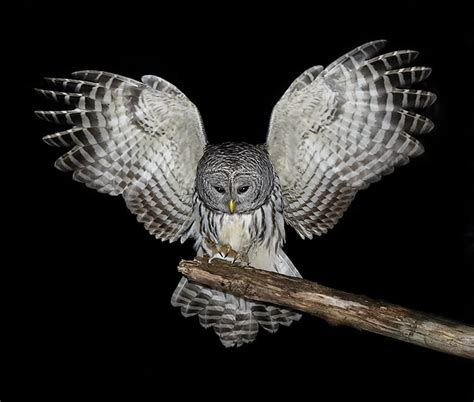 the birdchaser texas owl prowl