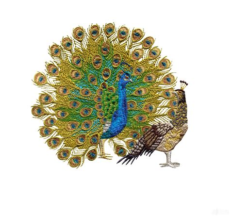 amazing designs com peacock embroidery designs hand embroidery www imgkid