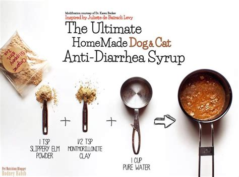 anti diarrhea for dogs 17 best images about pet nutrition on maker for dogs and pets