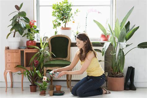 hot  indoor plants trend    homes