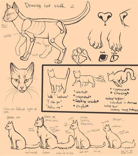 how to draw doodle cat drawing cats by neotheta on deviantart