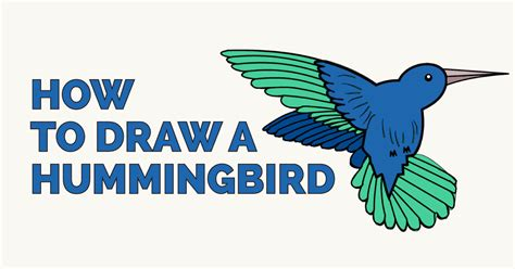 how to draw a hummingbird easy step by step drawing guides