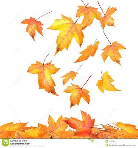maple leaves falling on white tattoos pinterest