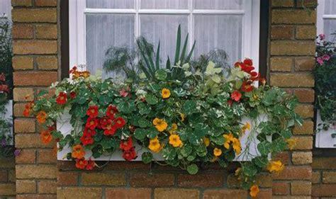 Alan Titchmarsh's tips on growing plants on balconies