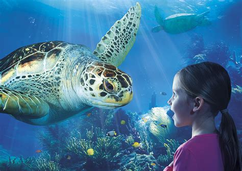 sea turtle ls sea life blankenberge riebedebie be