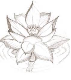 Lotus Flower Drawing Lotus Flower By Caityleelove On Deviantart