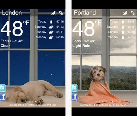 for dogs app 10 must apps for owners