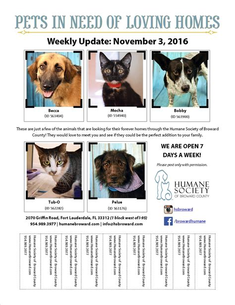 Weekly Pet Flyer November 3 2016 Humane Society Of Broward Countyhumane Society Of Broward Pet Adoption Flyer Template