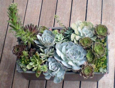 caring for succulents outdoors stuff pinterest