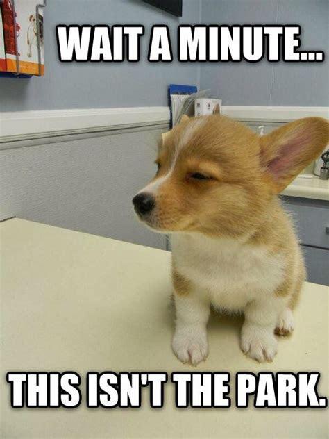 Puppies Memes - funny puppy memes kenzie the fuzzbucket