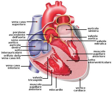 vasi coronarici coronarie cuore contraccezione rischio trombo embolico