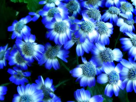 Blue Flowered Wallpaper 2017 Grasscloth Wallpaper Blue Flower