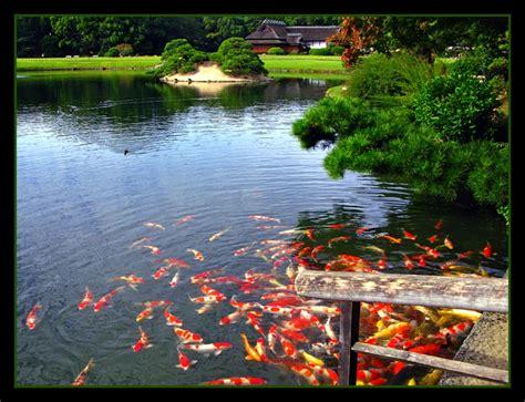 Koi Garden by Japanese Gardens Koi A Photo From Okayama Chugoku