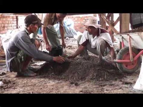 Pupuk Kotoran Sapi Untuk Sawit pupuk kompos kotoran sapi pupuk hantu multiguna